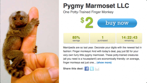 One Potty Trained Finger Monkey on LivingSocial's Deal Jungle