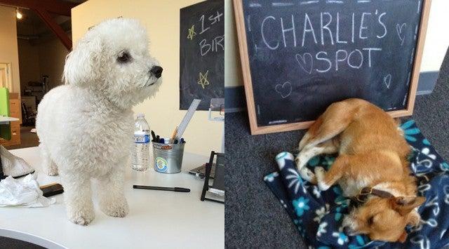 Educents-Bella-Charlie