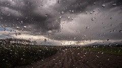 Weatherback