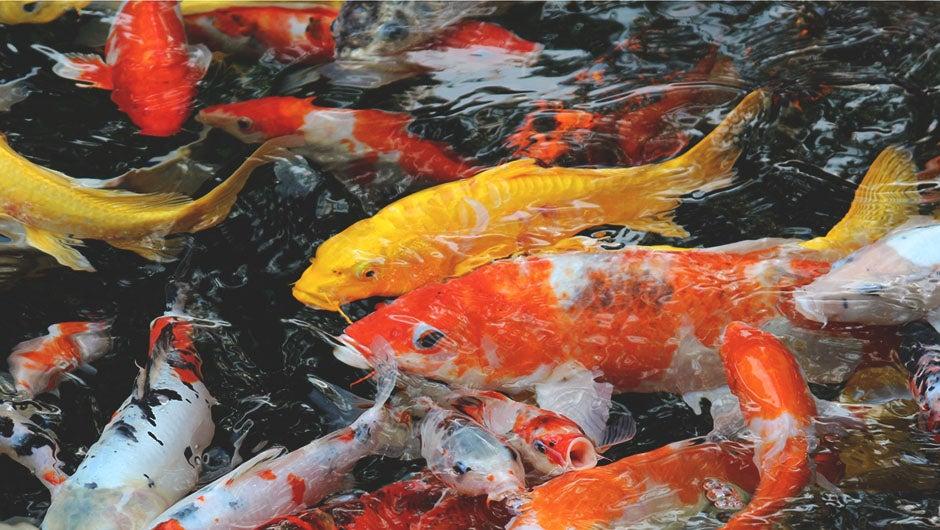 fish plenty dating