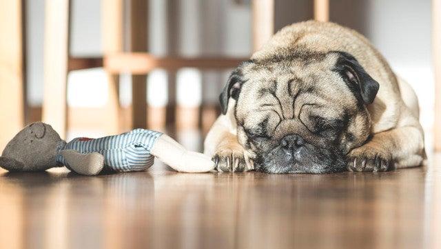 The Sleeping Habits of 21 Entrepreneurs [INFOGRAPHIC]
