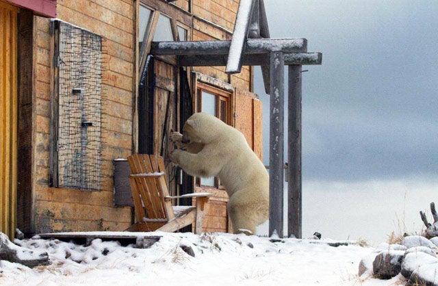 door to door sales bear