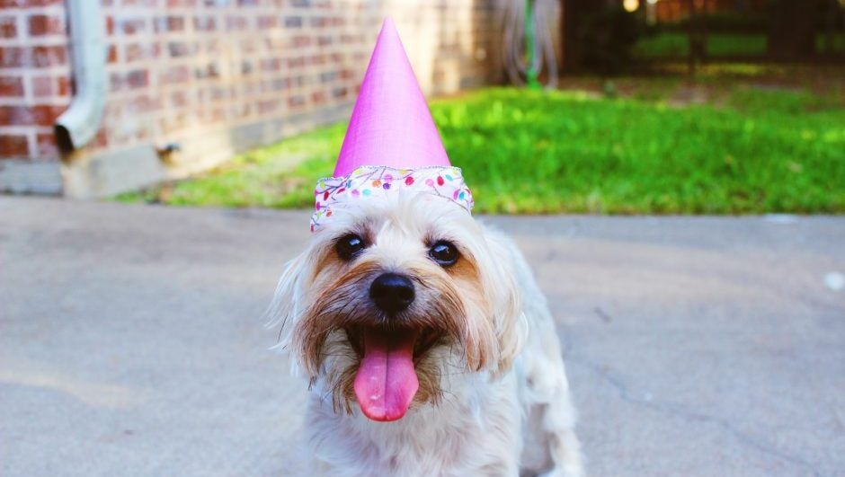 birthday breeding party