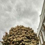 tree grey sky moto g7 play review