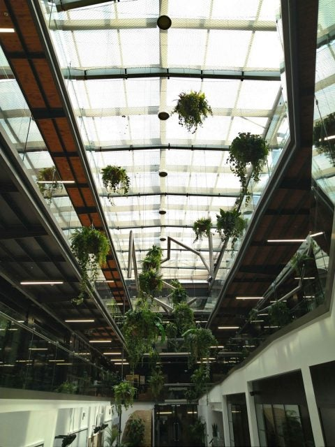 sony xperia 10 plus review photo plants hanging from building roof