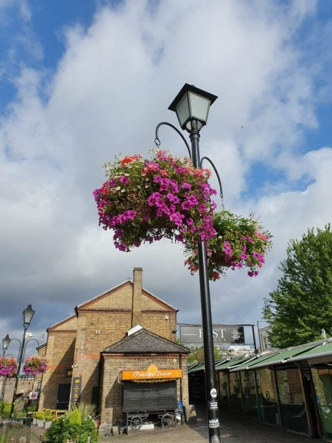 photo of hanging baskets taken on the samsung galaxy s10 5g