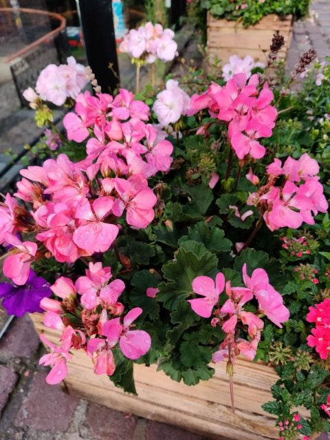 flower box photo taken on oneplus 7