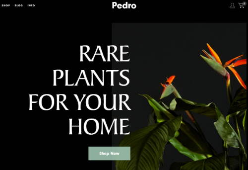 rare plants store homepage