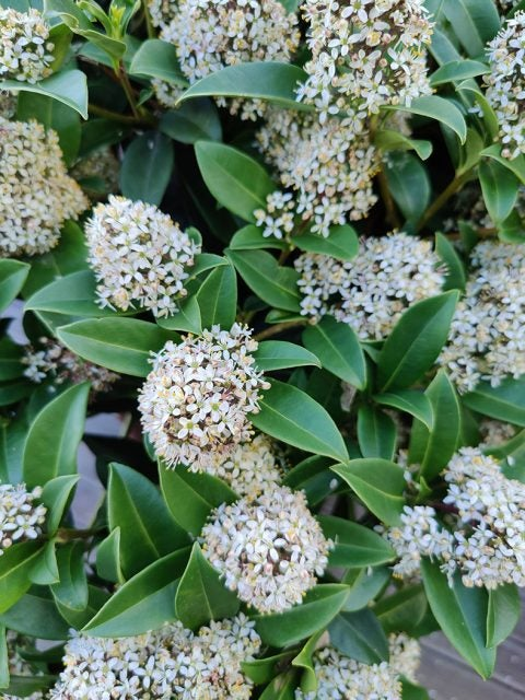 close up of green plant with white flowers