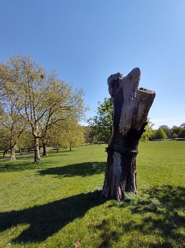 tree stump in park