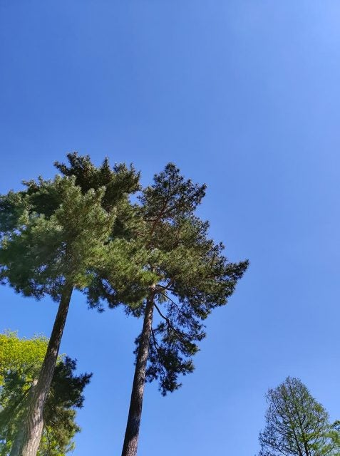 trees in front of blue sky shot by tcl 10 pro