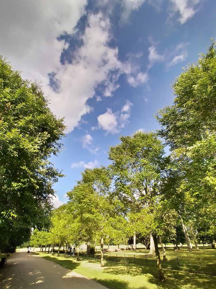 trees in peckham park
