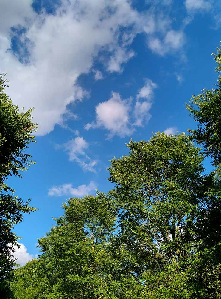 trees with blue sky