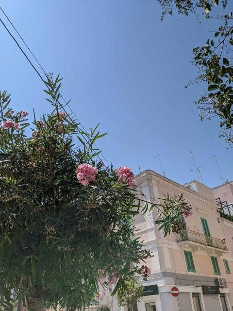 flowers on tree in italian street