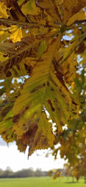 close up of tree leaf